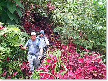 Trekking through the exotic thick jungles of Papua