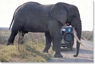 Capturing the wildlife in the Serengeti
