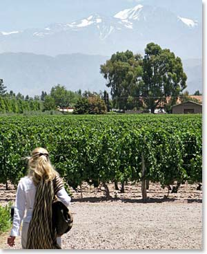 Beautiful views and many vineyards await in Mendoza!