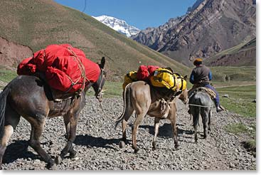 Our trusty mules carry our bags to base camp.
