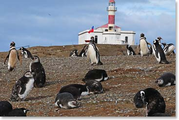 Penguins on the Magdalena Islands are one of the many sights on our Patagonia adventure.